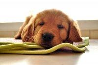 zdrowie psa