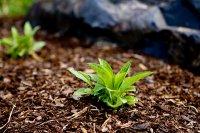 rośliny do ogrodu