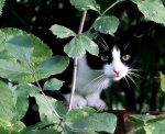 Czarno biały kot