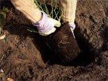 Wiosenne sadzenie krzewów